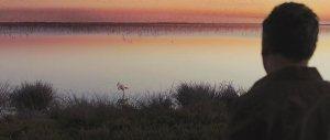 marshland-bird